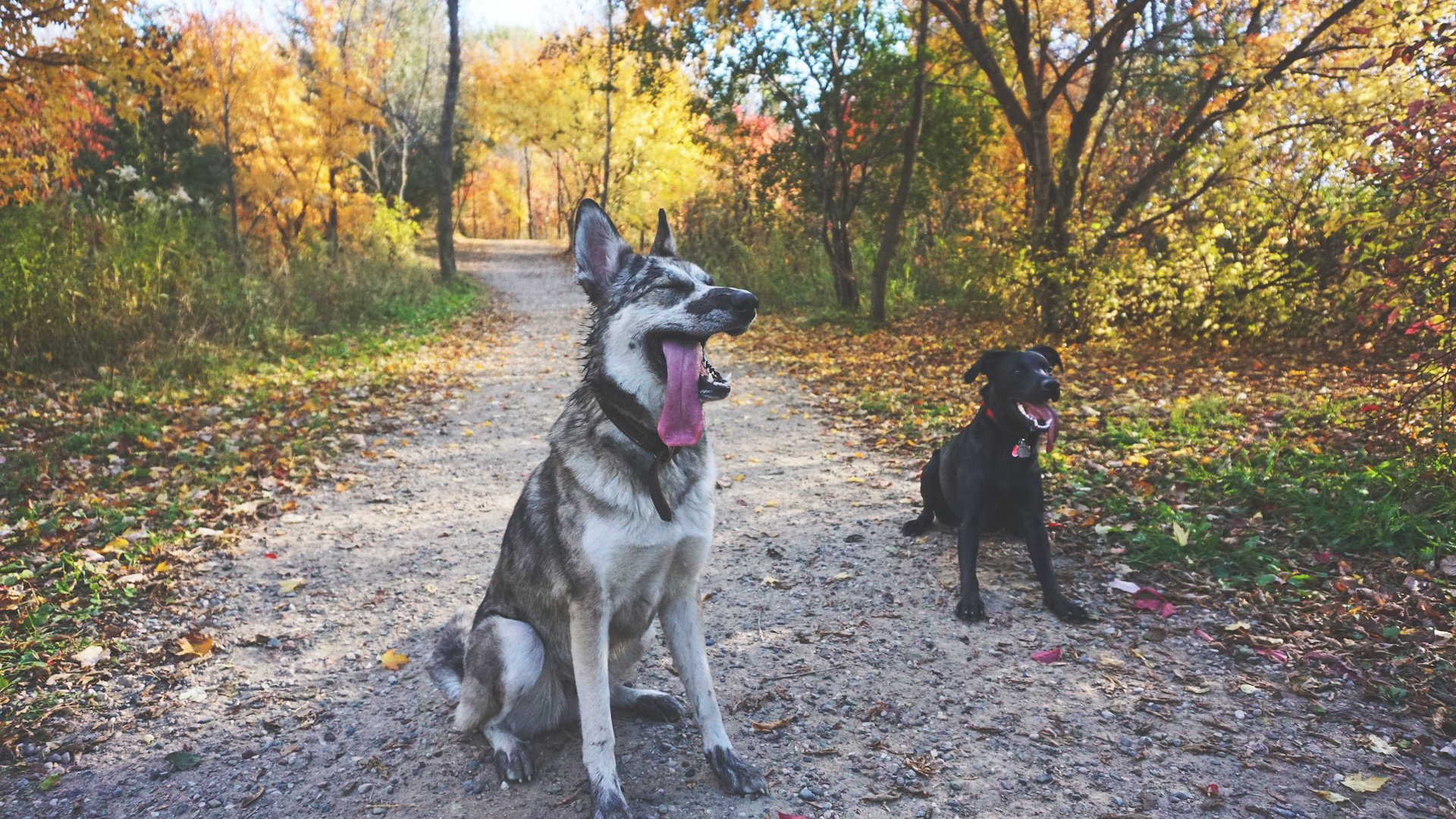 Elm Creek Park Reserve's Dog Park was voted one of the 10 best in the country by USA Today!