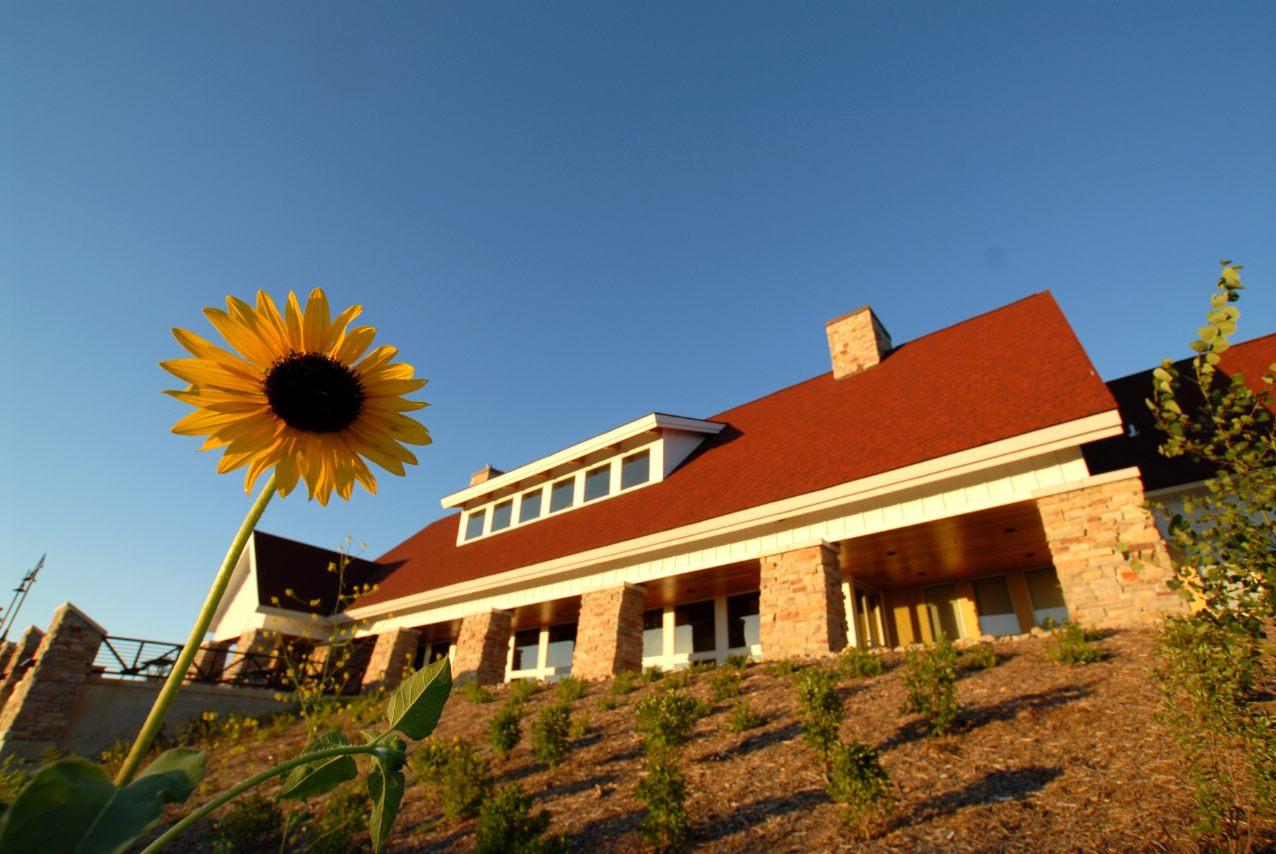 Sunflower in front of Elm Creek Chalet