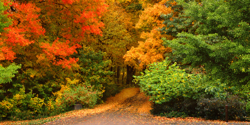 Path in the woods surrounded by colorful trees