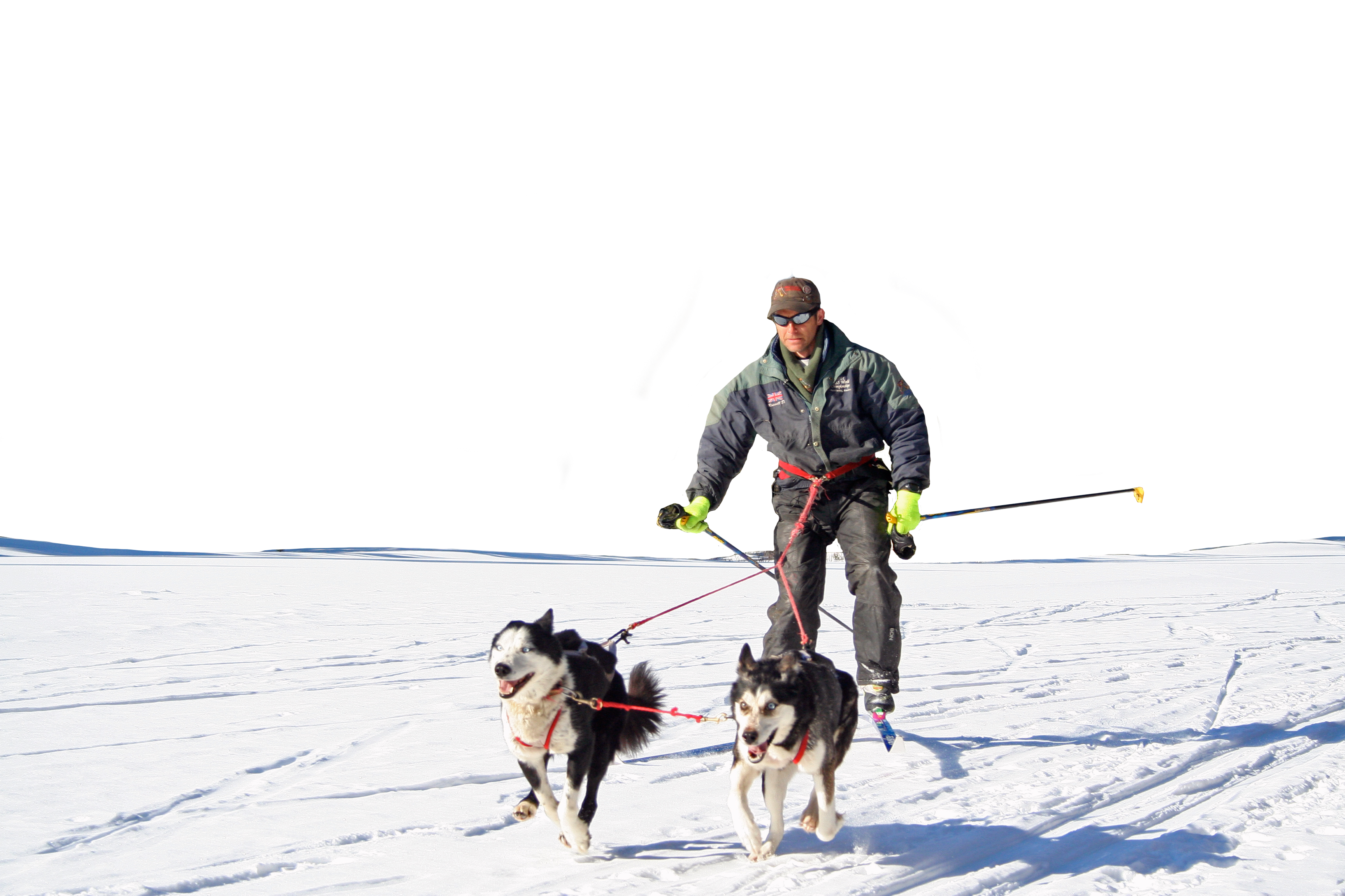 Man skijoring with two huskies