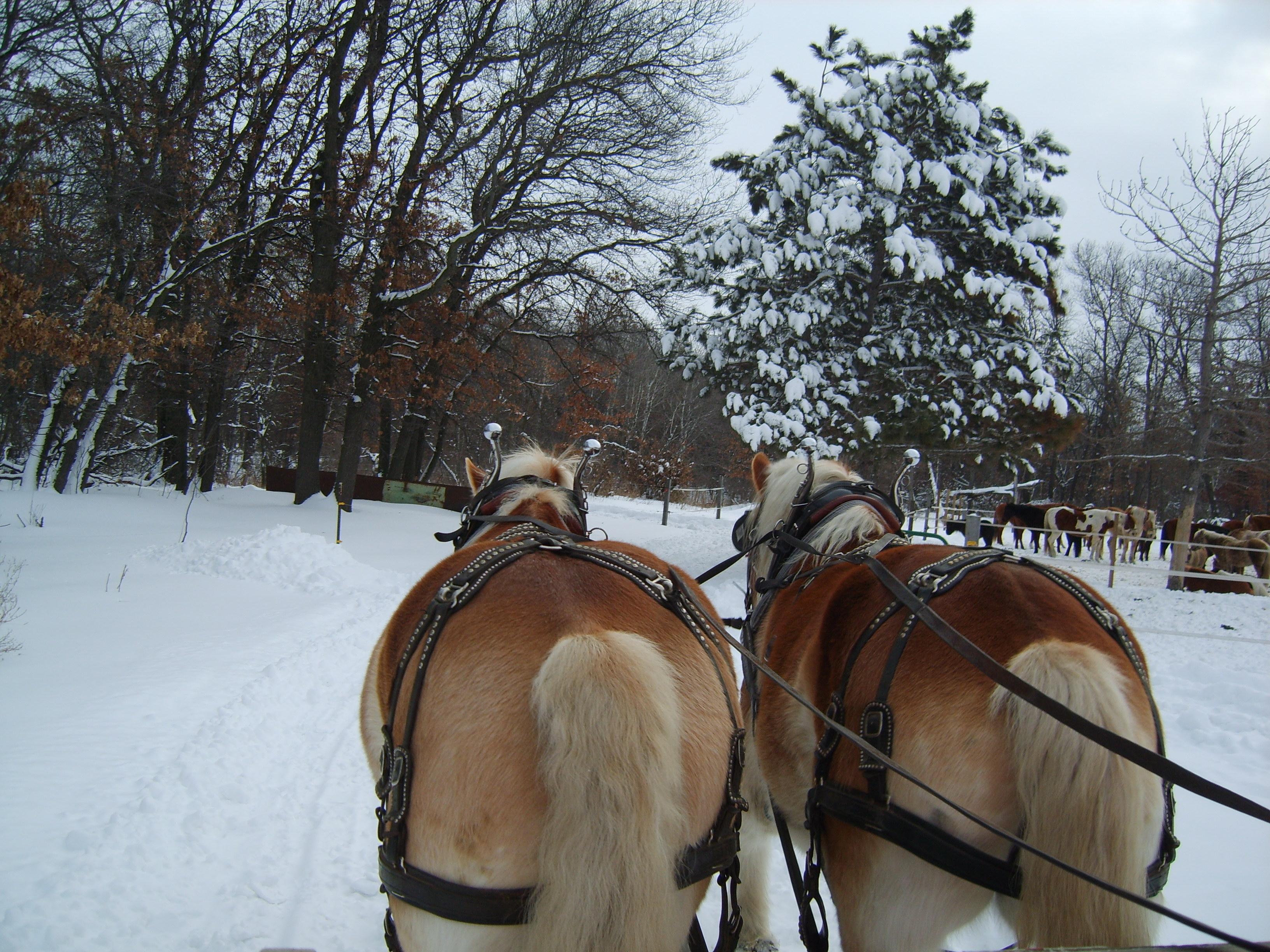 horse ride through the snow