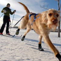 winter fun with your dog in minneapolis