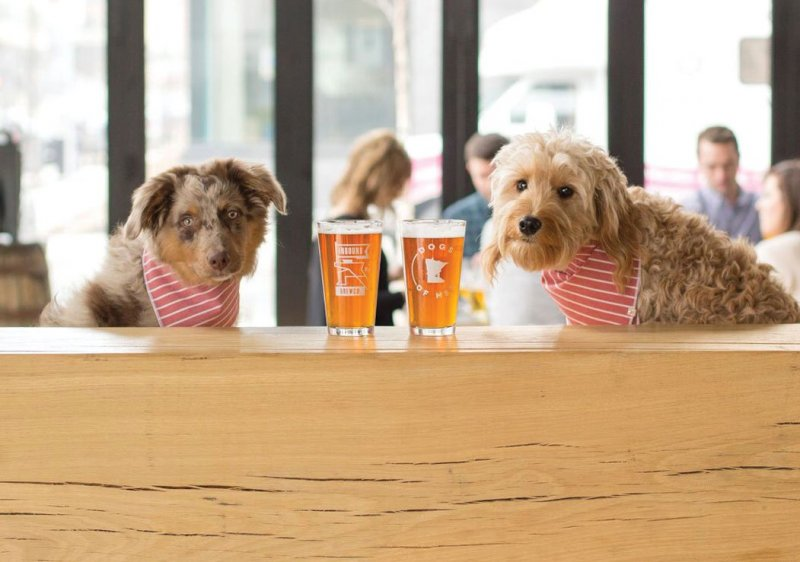 Puppies sitting next to pints of beer
