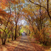 Fall at Elm Creek Park Reserve