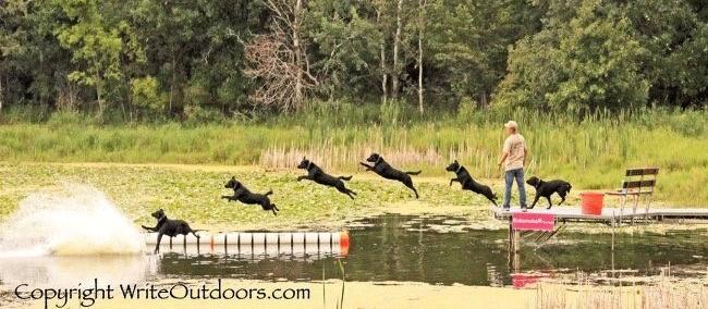 game fair dog jumping